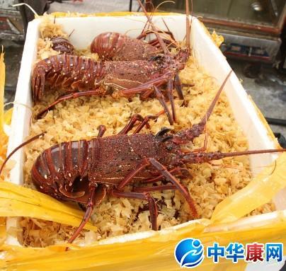 大龙虾的清洗方法