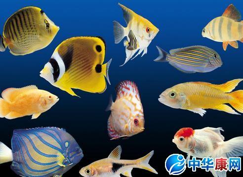 热带鱼种类 热带鱼的种类有哪些 中华康网