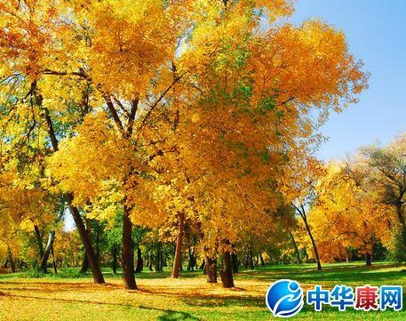 秋天的诗句_描写秋天的诗句_腹有诗书
